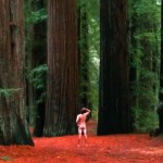 Redwoods California John DeFeo Artist Nude Naked Landscape Artist Art Photo
