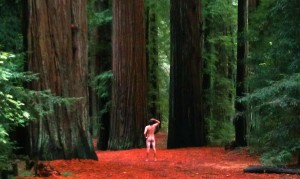 Redwoods California John DeFeo Artist Nude Naked Landscape Artist Art Photo
