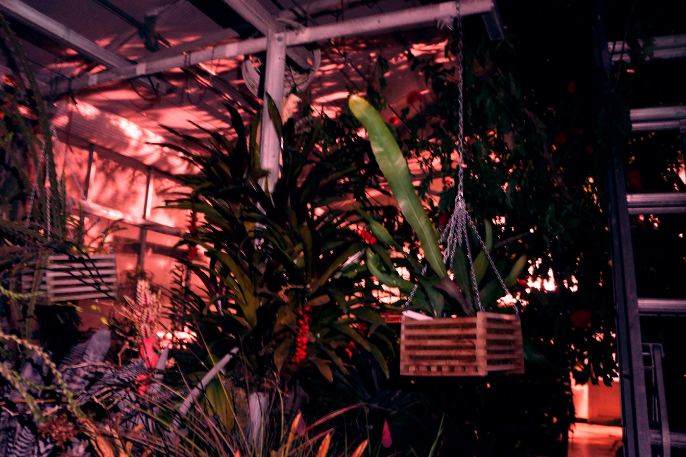 john defeo greenhouse at night 3